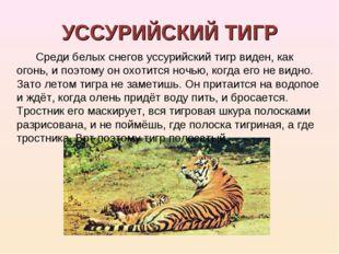 УССУРИЙСКИЙ ТИГР Среди белых снегов уссурийский тигр виден, как огонь, и поэт