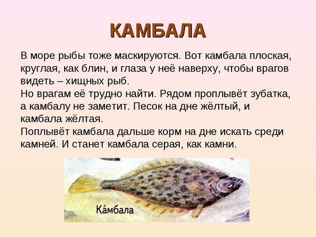 КАМБАЛА В море рыбы тоже маскируются. Вот камбала плоская, круглая, как блин,...