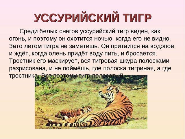 УССУРИЙСКИЙ ТИГР Среди белых снегов уссурийский тигр виден, как огонь, и поэт...
