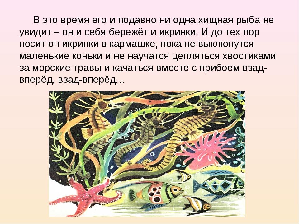 В это время его и подавно ни одна хищная рыба не увидит – он и себя бережёт...