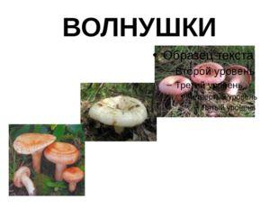 ВОЛНУШКИ