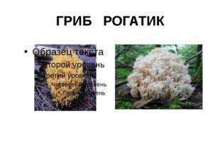 ГРИБ РОГАТИК