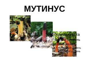 МУТИНУС