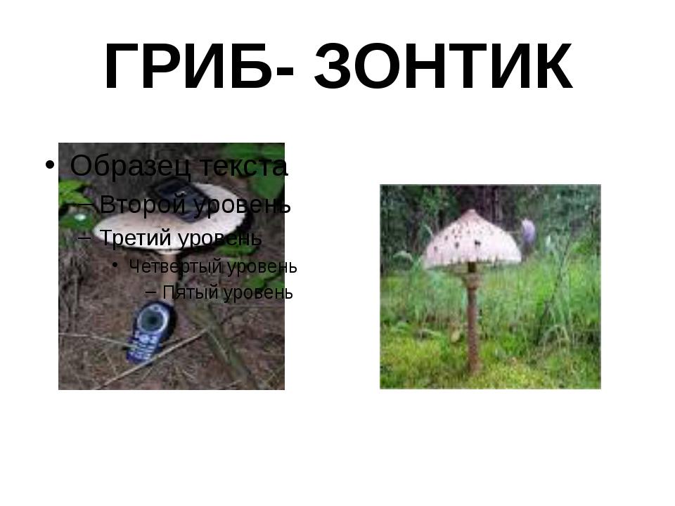 ГРИБ- ЗОНТИК