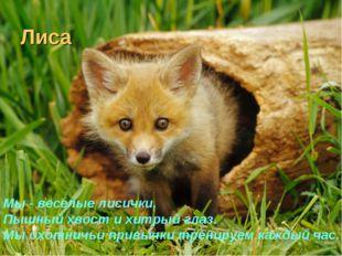 Лиса Мы - веселые лисички, Пышный хвост и хитрый глаз. Мы охотничьи привычки