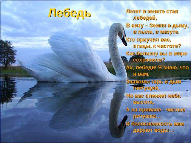 Лебедь Летит в зените стая лебедей, В низу – Земля в дыму, в пыли, в мазуте....