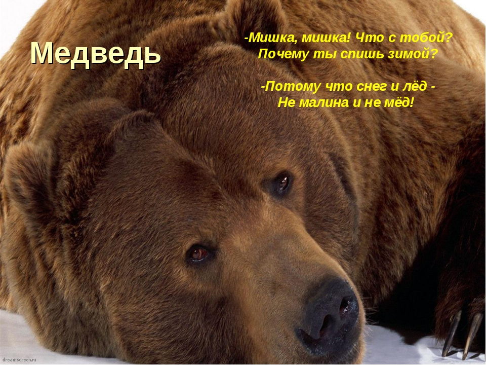 Медведь -Мишка, мишка! Что с тобой? Почему ты спишь зимой? -Потому что снег и...