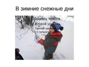 В зимние снежные дни