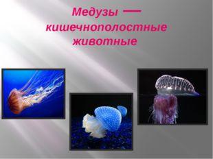Медузы — кишечнополостные животные