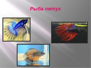 Рыба петух