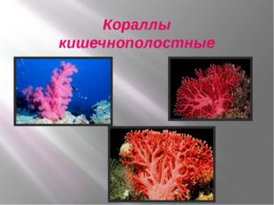 Кораллы кишечнополостные