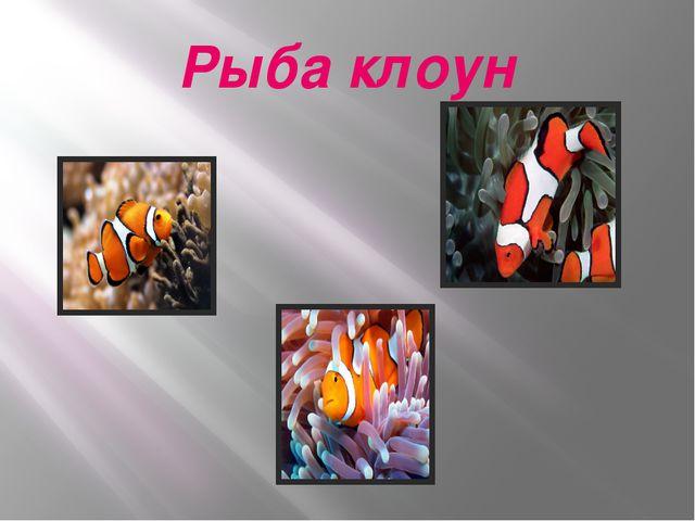 Рыба клоун
