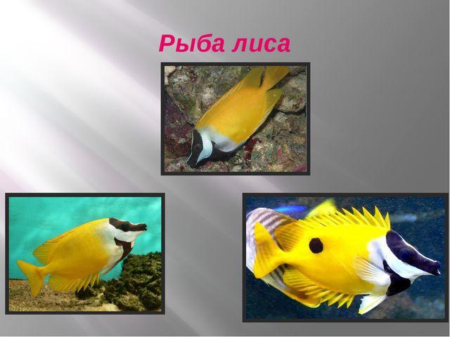 Рыба лиса