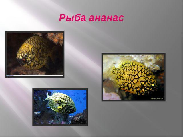 Рыба ананас
