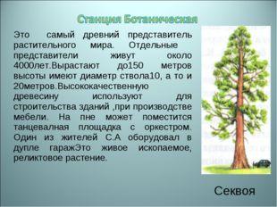 Это самый древний представитель растительного мира. Отдельные представители ж