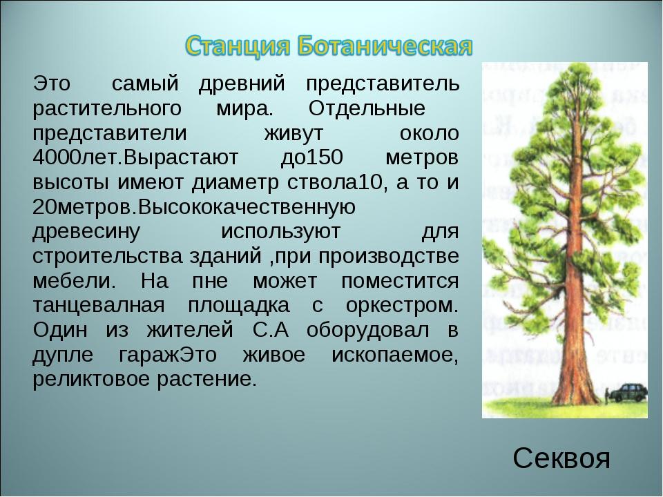 Это самый древний представитель растительного мира. Отдельные представители ж...