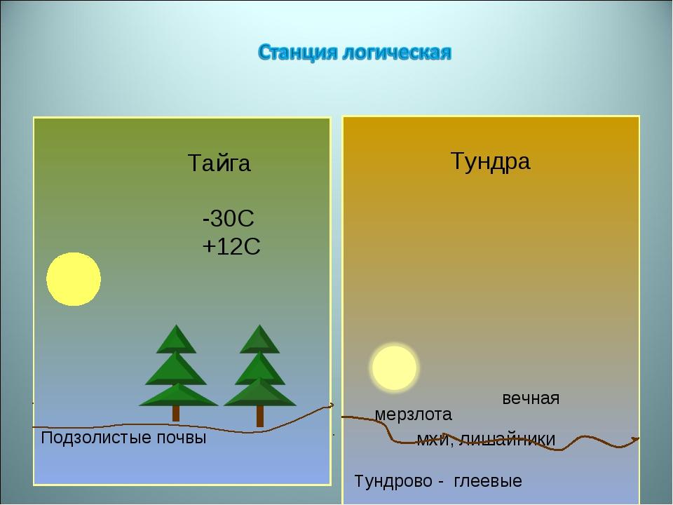 Тайга -30С +12С Подзолистые почвы Тундра вечная мерзлота мхи, лишайники Тунд...