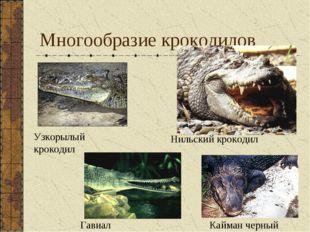 Многообразие крокодилов Кайман черный Узкорылый крокодил Гавиал Нильский крок