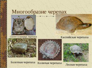 Многообразие черепах Каспийская черепаха Колючая черепаха Лесная черепаха Ске
