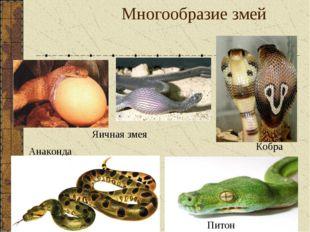 Многообразие змей Кобра Питон Яичная змея Анаконда