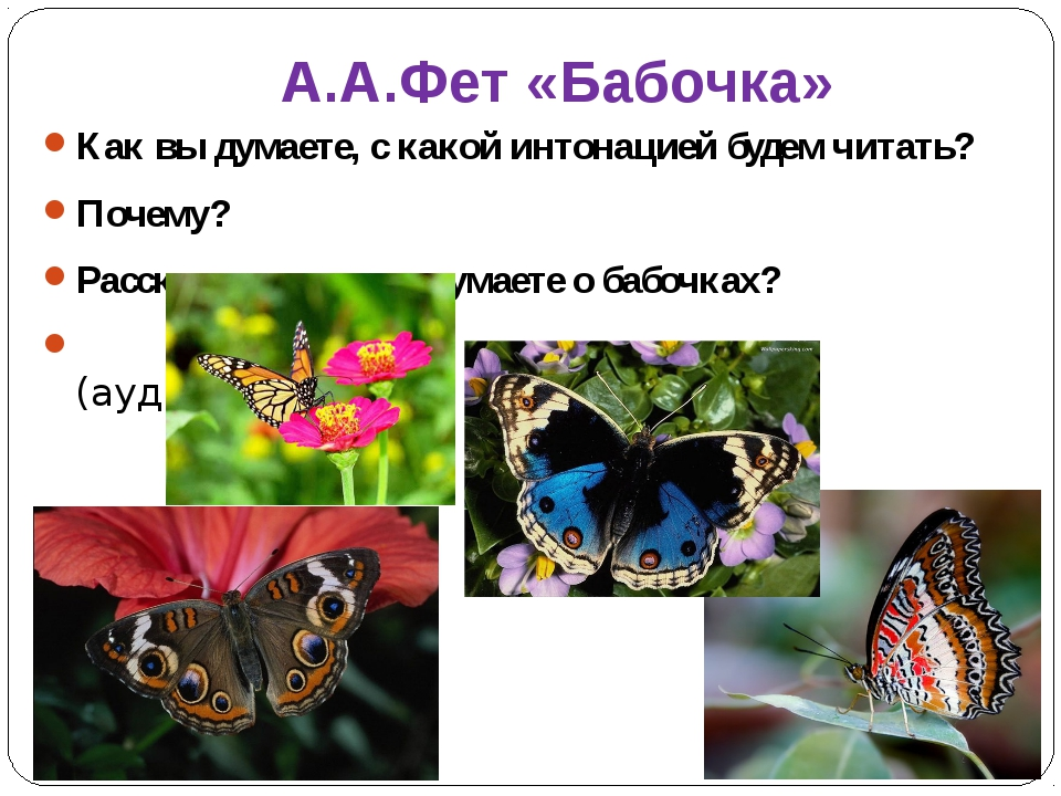 А.А.Фет «Бабочка» Как вы думаете, с какой интонацией будем читать? Почему? Ра...