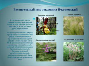 Растительный мир заказника Ичалковский В состав заказника входит Ичалковский