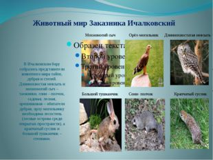Животный мир Заказника Ичалковский В Ичалковском бору собрались представители