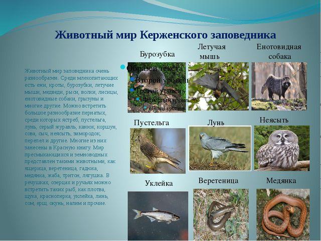 Животный мир Керженского заповедника Животный мир заповедника очень разнообра...