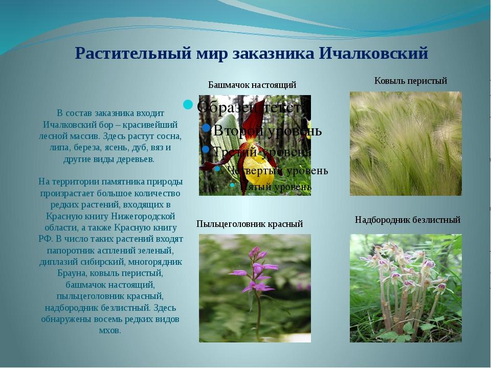 Растительный мир заказника Ичалковский В состав заказника входит Ичалковский...