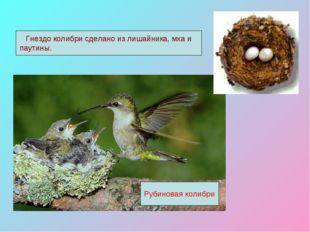 Рубиновая колибри Гнездо колибри сделано из лишайника, мха и паутины.
