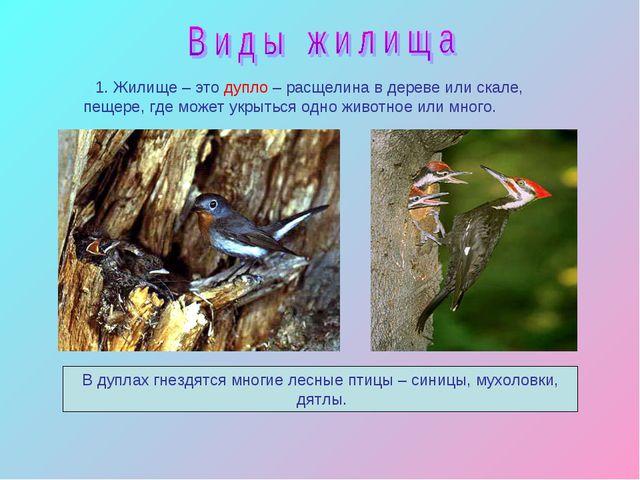 1. Жилище – это дупло – расщелина в дереве или скале, пещере, где может укры...