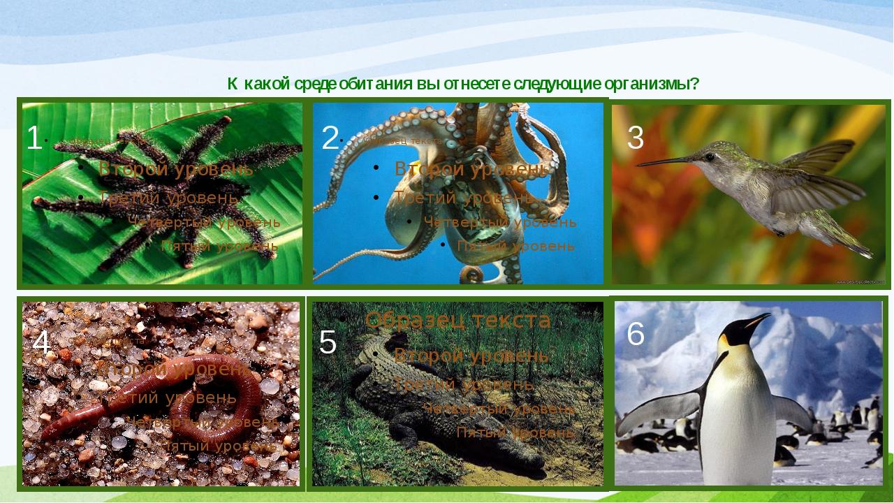 К какой среде обитания вы отнесете следующие организмы? 1 2 4 5 3 6