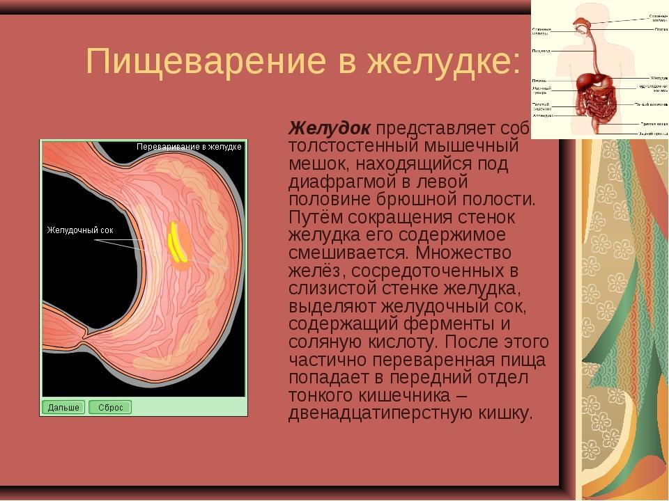 желудок в отличие от ротовой полости является отделом Ротовая полость человека - строение, функции, процесс.