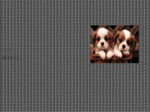 Цель моего исследования: – познакомиться с породами собак, подробнее узнать о