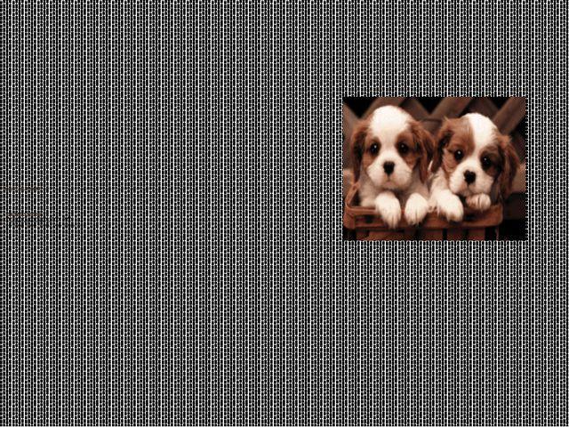 Цель моего исследования: – познакомиться с породами собак, подробнее узнать о...