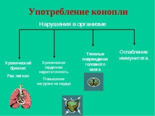 Употребление конопли Хронический бронхит Рак легких Хроническая сердечная нед