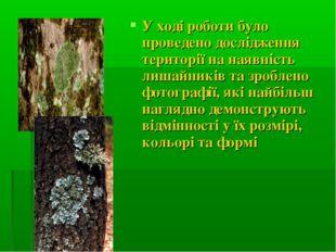 У ході роботи було проведено дослідження території на наявність лишайників та