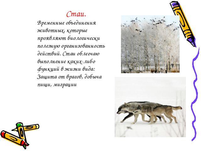 Стаи. Временные объединения животных, которые проявляют биологически полезную...