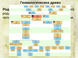 Генеалогическое древо Родословная – перечень поколений одного рода, устанавл