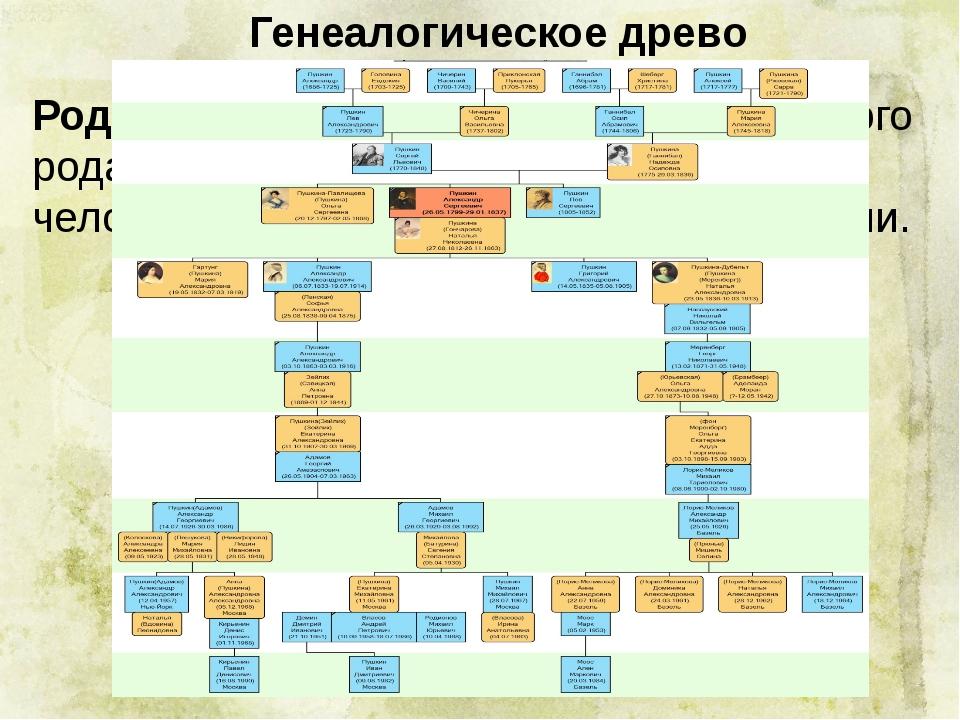 Генеалогическое древо Родословная – перечень поколений одного рода, устанавл...