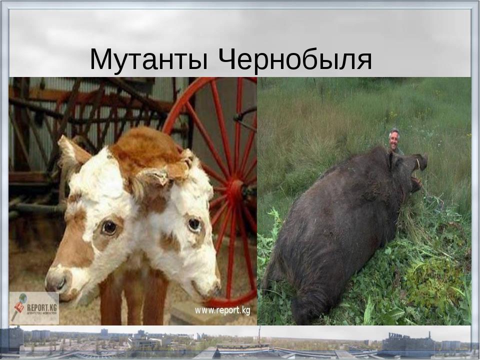 gospozha-rabinya-i-igrushki