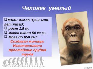 Человек умелый Жили около 1,5-2 млн. лет назад; рост 1,5 м, масса около 50 кг
