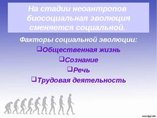 На стадии неоантропов биосоциальная эволюция сменяется социальной. Факторы со