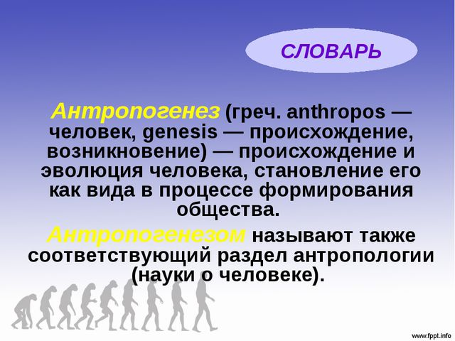 Антропогенез(греч. anthropos — человек, genesis — происхождение, возникновен...