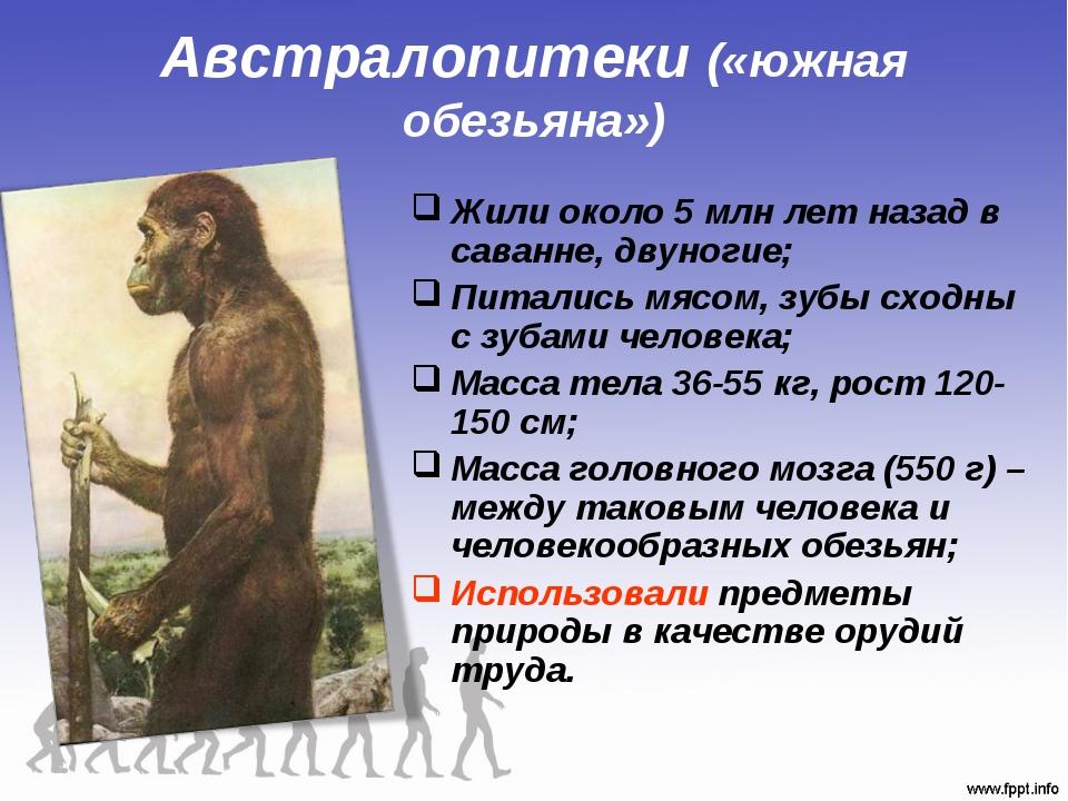 Австралопитеки («южная обезьяна») Жили около 5 млн лет назад в саванне, двуно...