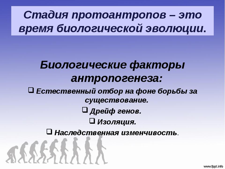 Стадия протоантропов – это время биологической эволюции. Биологические фактор...