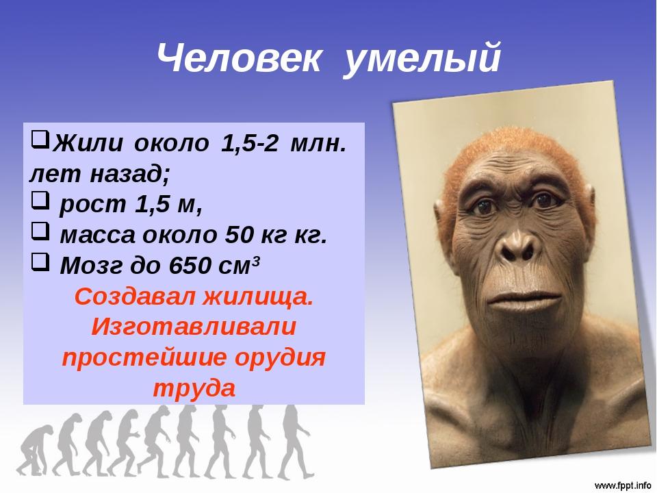 Человек умелый Жили около 1,5-2 млн. лет назад; рост 1,5 м, масса около 50 кг...