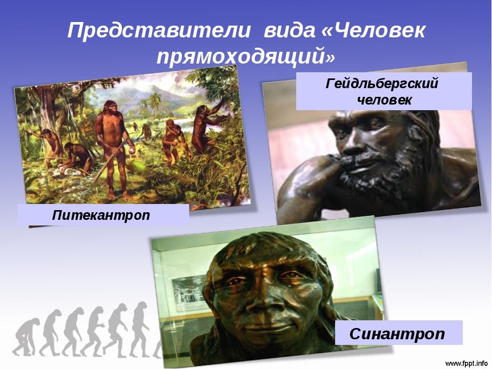 Представители вида «Человек прямоходящий» Питекантроп Гейдльбергский человек...