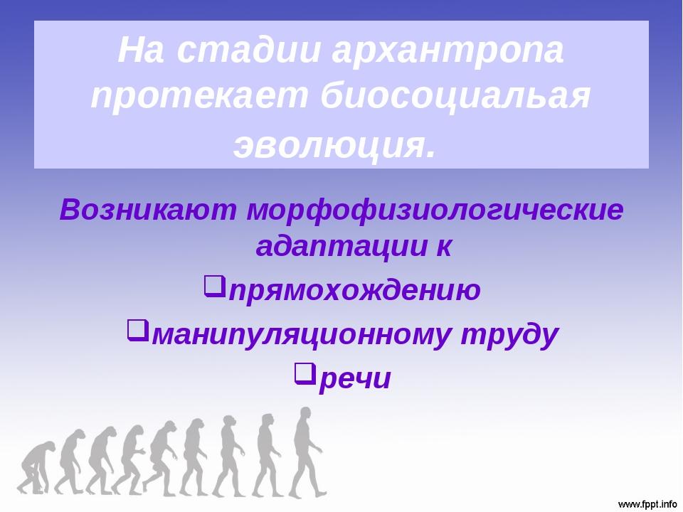 На стадии архантропа протекает биосоциальая эволюция. Возникают морфофизиолог...