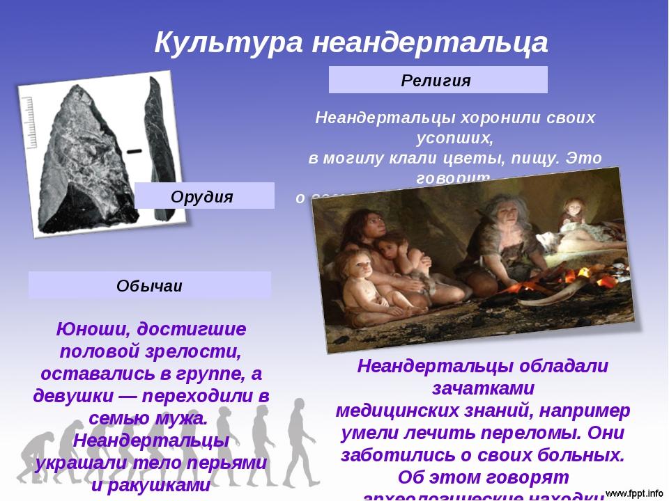 Культура неандертальца Орудия Юноши, достигшие половой зрелости, оставались в...